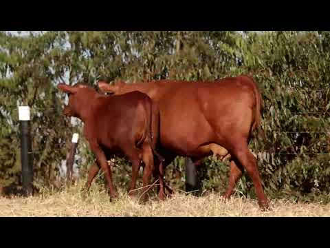 LOTE 03   CHM 0035