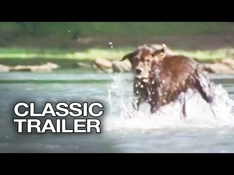 Fluke Official Trailer #1 - Samuel L. Jackson Movie (1995) HD