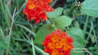 Kambang Bungo - Lagu Minang Mp3