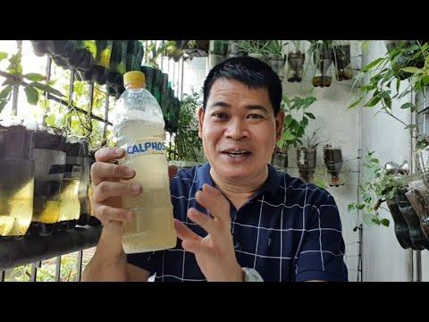 Download PAGGAWA NG CALPHOS FERTILIZER, PAMPAKAPIT NG BUNGA NG HALAMAN (with ENG subs)