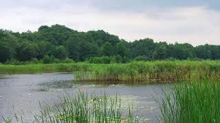 Holosiiv National Nature Park | Wikipedia audio article