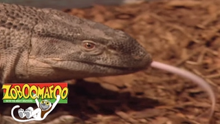 🐒 Zoboomafoo🐒 Season 1 Episode 3 Dinosaurs | HD | Full Episode