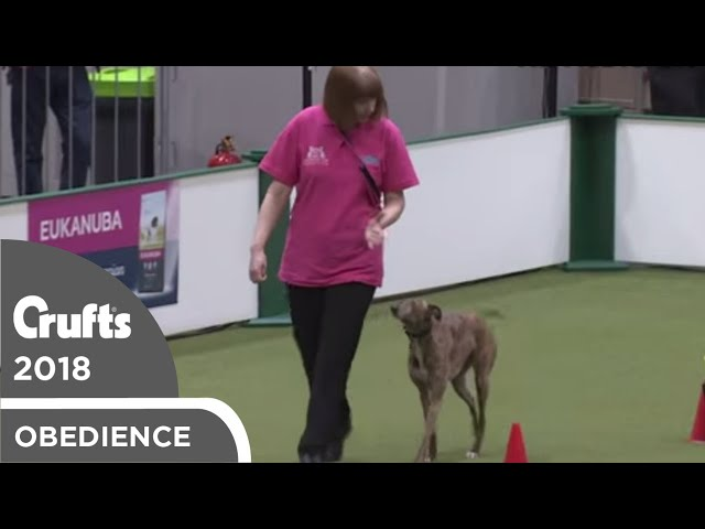 Inter-Regional Rally - Level 4 - Part 6 | Crufts 2018