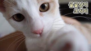 만질 때마다 골골이하는 아기 고양이 고롱고롱고롱고롱