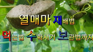 열매마재배법 수확시기 먹는법 보관방법 까지