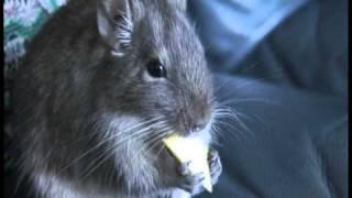 ネズミと海老蔵