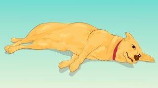 Важно! 4 Признака, что жизнь твоей собаки в опасности.