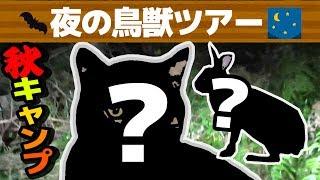 【秋キャンプ】真夜中の鳥獣ツアーで野生動物連発もダウン寸前?【赤髪のとも】#2