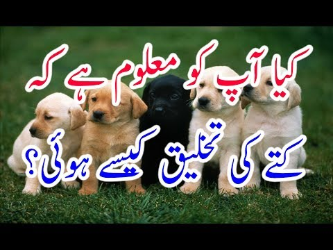 Islamic History of Dog Creation#Kutte ko Allah Ne kiss Tarah Paida kiya#Dog ki Paidaish
