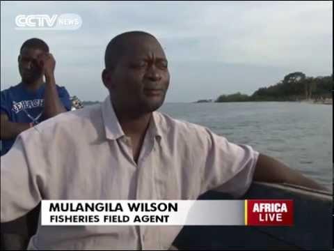 Authorities in Uganda Struggles to Combat Illegal Fishing in L. Victoria