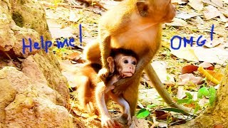 OMGG! Too Small, This Little Monkey Kidnapping Baby David Running Very Fast , Diamond Following