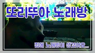 시바견 또리뚜아 노래방 개업^^