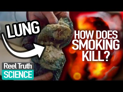 BIGGEST Consumer KILLER?: The Seduction of SMOKING | Ep 1 | Science Documentary | Reel Truth Science