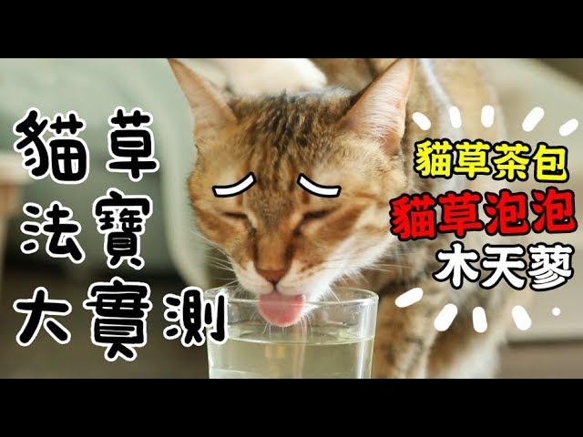 黃阿瑪的後宮生活-貓草法寶大實測-竟有貓草泡泡