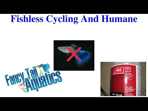 Fishless Cycling With Ammonia