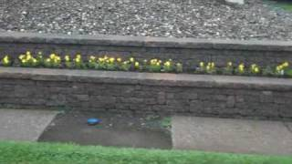 Chris Orser Landscaping: Stone Wall, Brick Wall, Flower Plantings