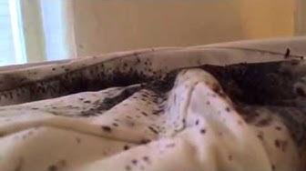 Bed Bug Evidence - Pest Control in West Palm Beach & Stuart, FL