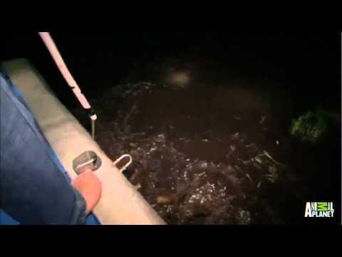 Catching Gators at Night   Gator Boys