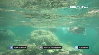Keindahan Bawah Laut Karimun Jawa - SBOWEBTV HOLIDAY