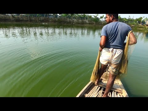 Throw Net Fishing on Boat | Unbelievable net fishing | fishing with a cast net (Part-02)