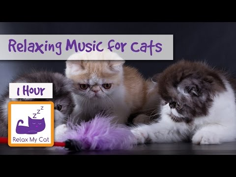 1 hour of Relaxing Music for Cats - Soothe your Cat with Music