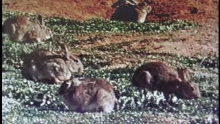 Invaders - Feral Animals & Pests in Australia