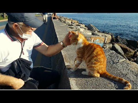 Cute lovely meowing cat's search for affection │Funny Cats