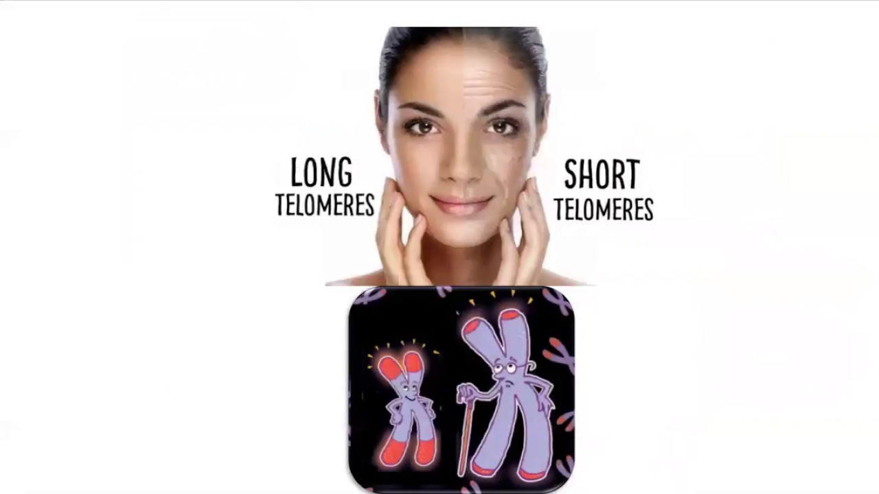 Telomeres & Aging Quick Overview
