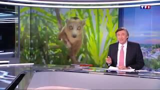 Sujet TF1: Canal des pangalanes