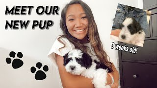 WE GOT A PUPPY!! + the first day at home (HAVANESE PUPPY)
