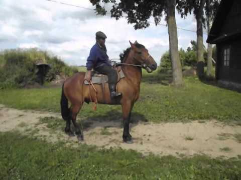 видео: цыганская пуга, цыганскі конь, цыган Артур.. пастух на Засьцянку Скрыплеў