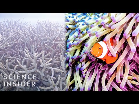 Why The Great Barrier Reef Could Disappear By 2050