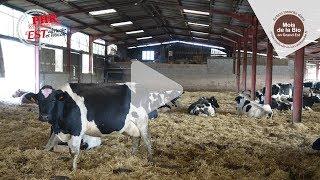 Mois de la bio : Une filière pour valoriser ses réformes laitières