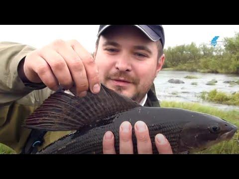 рыбалка на кольском полуострове окуней