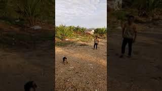 Anjing vs manusia
