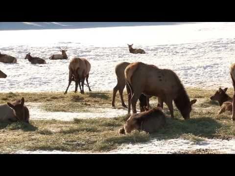Grant's Getaway:  Elkhorn Wildlife Area