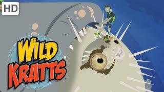 Wild Kratts 🐬🐢 Incredible Creatures! (Part 1) 🐘 Kids Videos