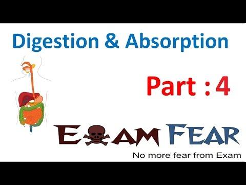 Biology Digestion & Absorption part 4 (Teeth: Incisor, canine, Pre molar , molar) CBSE class 11 XI