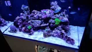 Red Sea REEFER 250 9 weeks update. Small problem!!