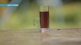 Как приготовить вино из бузины | Ранок з Україною