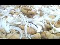 Patitas De Pollo En Vinagre Receta En Vivo