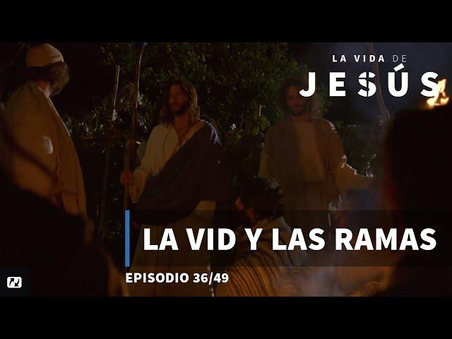 La vid y los sarmientos | La vida de Jesús | Español | 36/49
