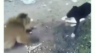 Hayvanlar alemi dublaj 2🐒🐈🐂🦆