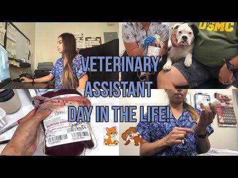 Vet Assistant Work Vlog!🐶🐱