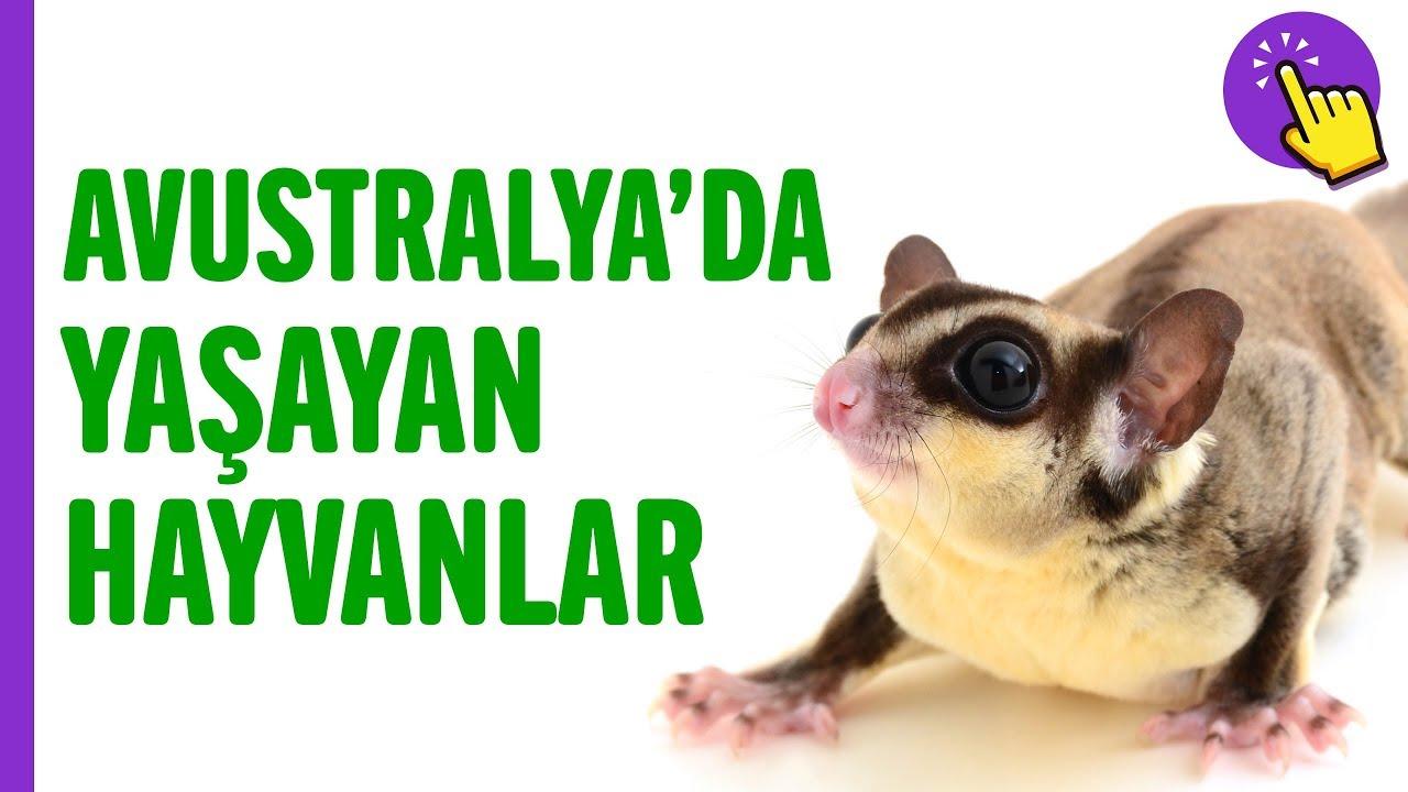 Avustralya'da yaşayan hayvan türleri | Hayvanlar Alemi | Aklında olsun
