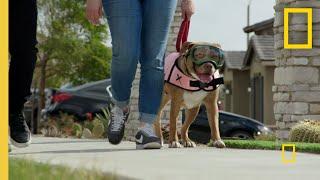 Calming an Overly Excitable Dog    Cesar Millan: Better Human Better Dog