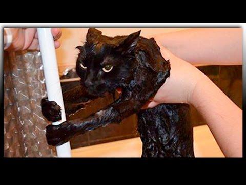 Видео про животных -