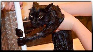 Смешное видео про животных  Приколы с животными Смешные кошки(Смешные видео про кошек. На канале много смешных видео про животных. Смешные видео про все на свете смотрите..., 2016-09-27T13:33:58.000Z)
