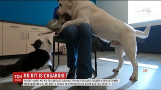 видео Кіт і собака в одному будинку
