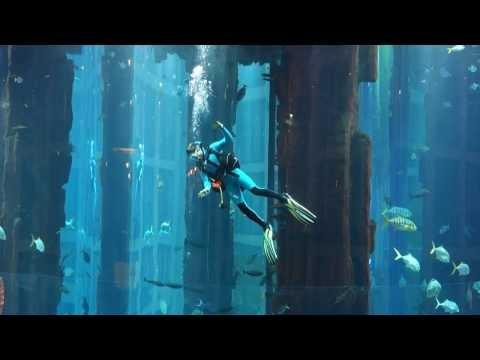 Profitaucher putzen im AquaDom Berlin, dem grössten zylindrischen freistehenden Aquarium der Welt.